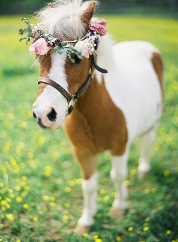meadow wedding with horses