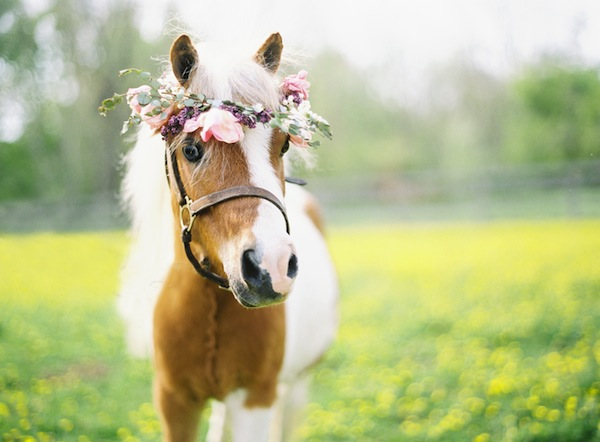 pony bridesmaid